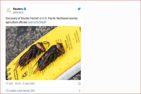 Mordercze owady z Azji. Ukąszeniem potrafią zabić